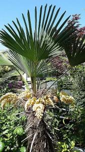20150504_palm-tree